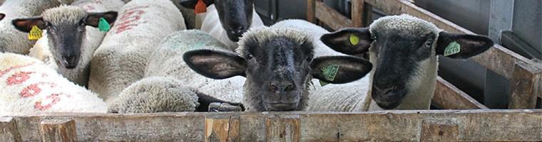 Small Animal Care Vet in Metamora MI